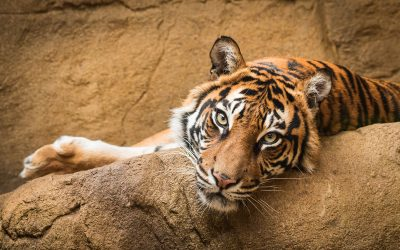 Find your Wild Side: The Best Places to Get Close to Animals in Niagara
